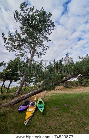 Sea Kayaks Ready To Be Used At The Sea Behind Pine Trees