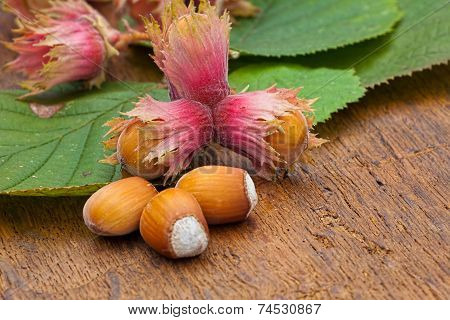 Hazelnut Fruits And Green Leaves