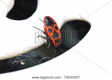 Fire Beetle Looks