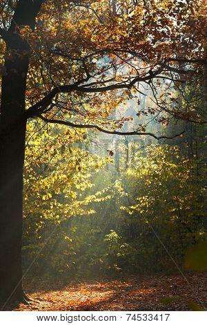 Sun Light Lit Glade In Autumn Forest