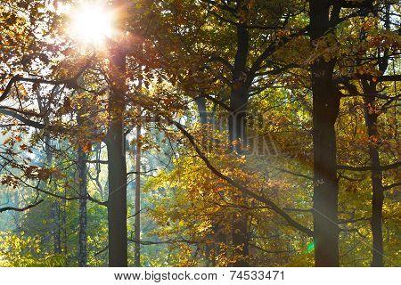 Sun Light Through Leafage In Autumn