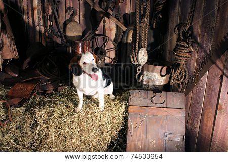 Spooky Dog