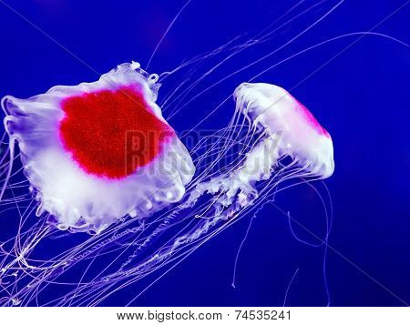 Jellyfish In Deep Blue Sea