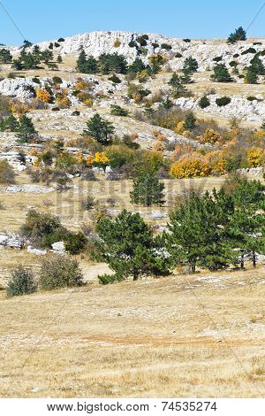 Trees On Mountain Plateau Ai-petri In Crimea