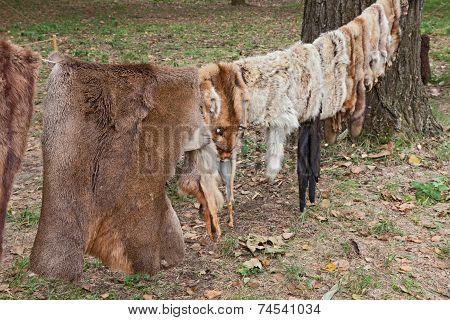 Wild Animal Skins