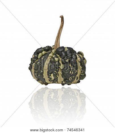 Pimply Pumpkin - Green