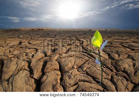 young plant on dry earth texture at thailand