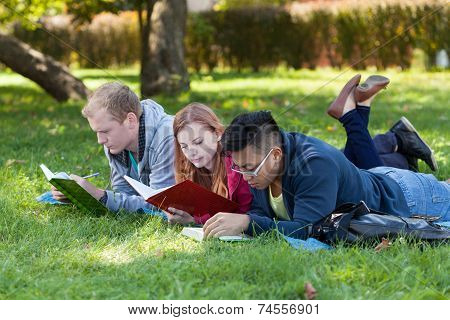 Young People Studying In The Park