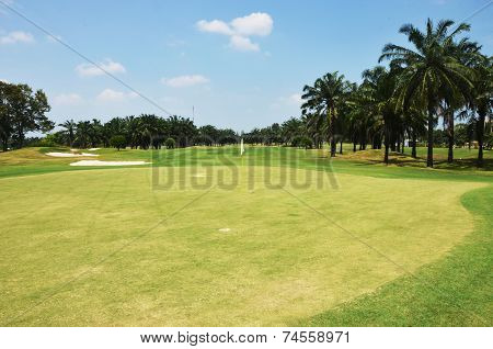 Grass  In The Golf Club