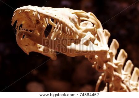 Dragon reptile skeleton 6