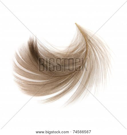 Isolated Feather