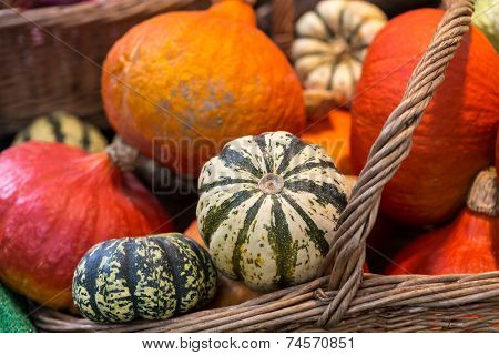 Ripe Pumpkins for sale in a greengrocery