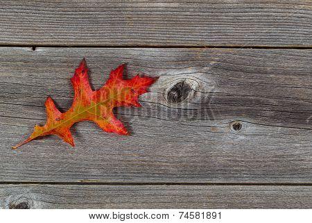Single Autumn Oak Leaf On Rustic Wood