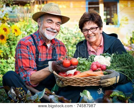 Senior couple with a basket of harvested vegetables in the garden
