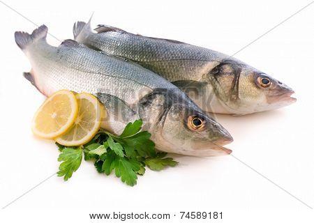 Seabass, Dicentrarchus labrax