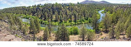 Conifer Forest Along The Deschutes River