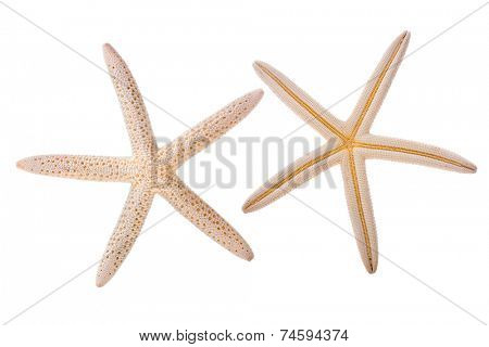 Sea star isolated on white background