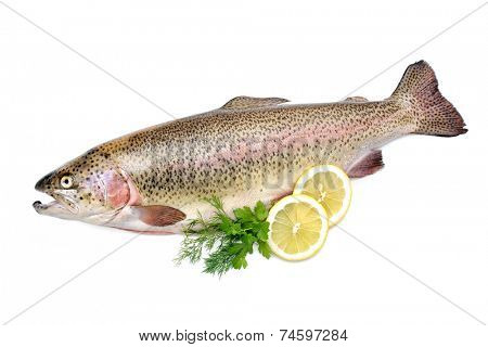 Rainbow trout with fresh herbs isolated on white background
