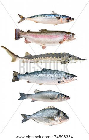 fish collection isolated on the white background