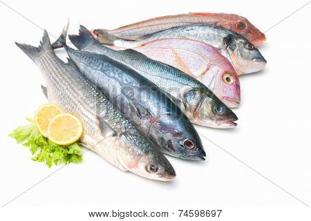 Fresh catch of fish  isolated on white background