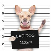 pic of felons  - mugshot dog holding a black banner or placard and waving his paws and blinking eye - JPG