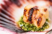 stock photo of scallop-shell  - Studio closeup of seared scallops garnished with pea shoots and served on a bed of green and purple curly lettuces presented on a scallop shell - JPG