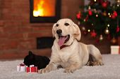 image of christmas dog  - Family pets receiving gifts for Christmas  - JPG