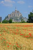 pic of mont saint michel  - Cornfield with poppies in background the Mont Saint Michel on the border of Brittany to Normandy France - JPG