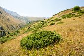 image of shan  - Nature near Big Almaty Lake Tien Shan Mountains in Almaty KazakhstanAsia at summer - JPG