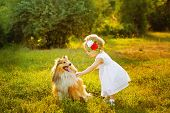 image of sheltie  - Little girl and dog breed sheltie playing outdoors on a sunny day - JPG