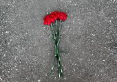 foto of deceased  - Red carnations lie on the pavement on the ground - JPG