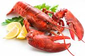 pic of lobster  - Lobster with parsley and lemon slices over white - JPG