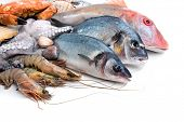 picture of shell-fishes  - Fresh catch of fish and other seafood - JPG