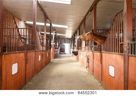 Horse In A Stable