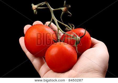 Three fresh ripe tomatoes in caucasian hand isolated on black