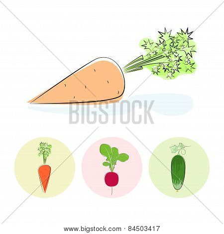 Icons carrot, cucumber, radish
