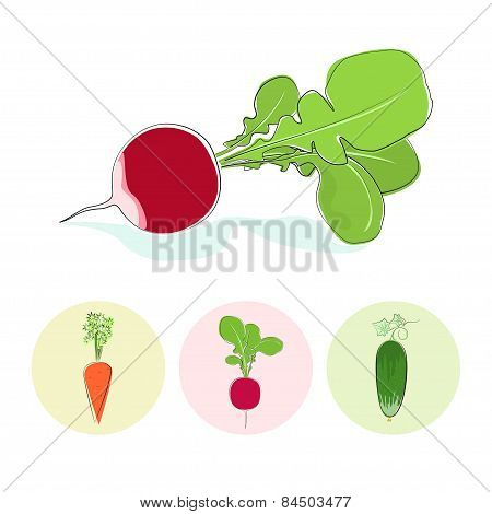 Icons radish,cucumber,carrot