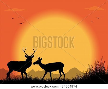 deer couple in the sunset