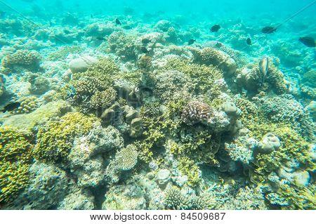 exotic marine life near Maldives island, tropical summer vacation concept