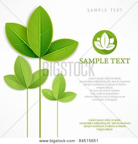 Branch With Green Leaves On White & Text