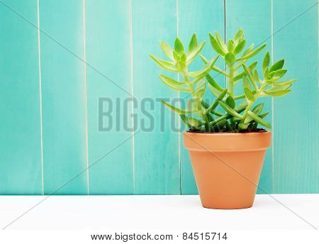 Green Plant On A Teal Colored Wall Background