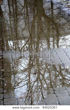 Reflection Of Tree Branches In A Puddle