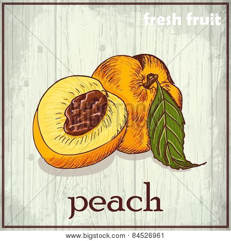 Hand Drawing Illustration Of Peach. Fresh Fruit Sketch Background