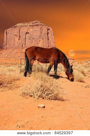 Horse Monument Valley