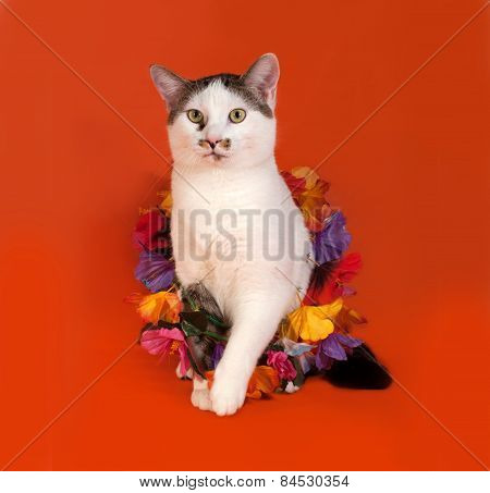 White And Tabby Cat Wrapped Christmas Tinsell Sitting On Orange