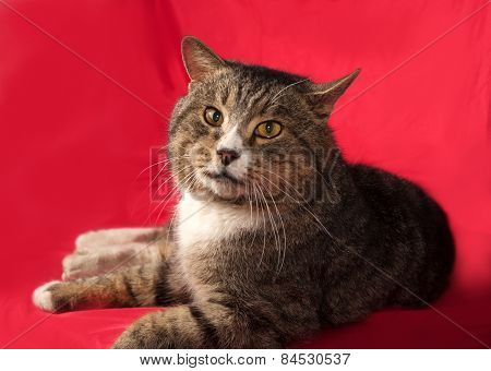 Tabby And White Cat Lying On Red