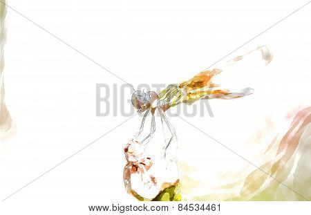 Dragonfly With Water Color