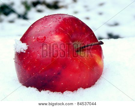 apple on snow
