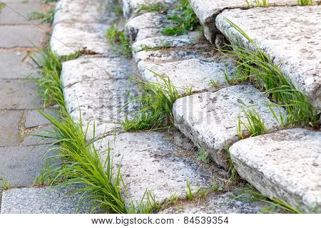 Old stone steps with grass