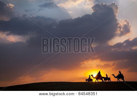 Donkey, camel, donkey, camel walking across the desert